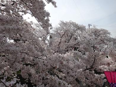 iwakura2.jpg